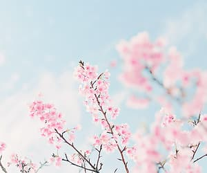 flowers, spring, and cherry blossom image