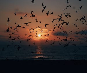 beach, birds, and fly image