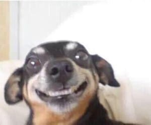 dog, smile, and happy image