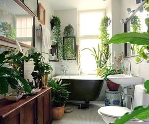 plants, bathroom, and green image