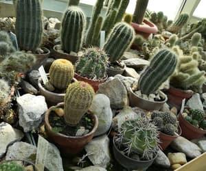 beautiful, garden, and cactus image