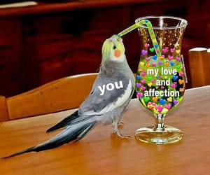 adorable, affection, and bird image