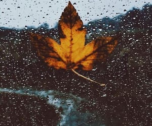 autumn, rain, and fall image