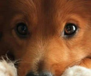 cachorro, dogs, and filhote image