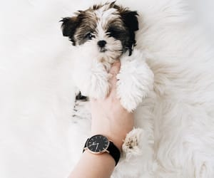 dog, dw, and watch image