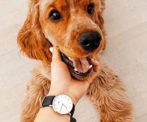 animal, pets, and dw image
