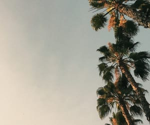 la, los angeles, and palms image