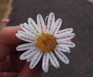 love, flowers, and daisy image