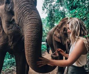 asia, blonde, and elephants image