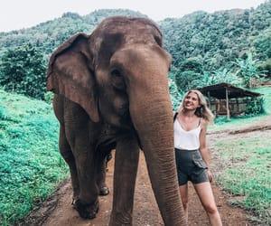asia, blonde, and elephant image