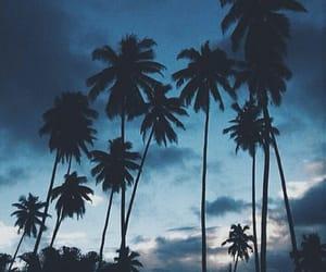 sky, blue, and palms image