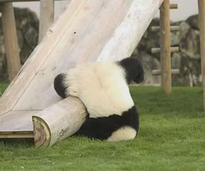 panda and slide image