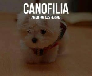 palabras bonitas, filias, and amor por los perros image