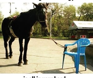 horse, quotes, and funny image