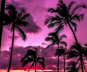 palm, 🌔, and 🌴 image