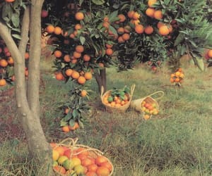 aesthetic, nature, and fruit image