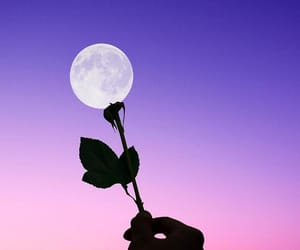 moon, flowers, and rose image