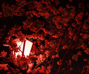 lamp, nature, and pretty image