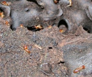 ant pest control perth, after hours pest control, and ant infestation image