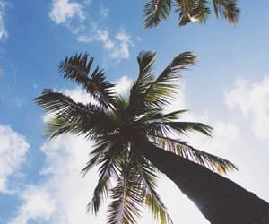 Dream, sky, and palm tree image