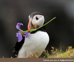 always, cutie, and flower image