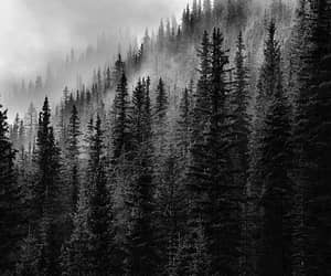 black and white, landscape, and photography image