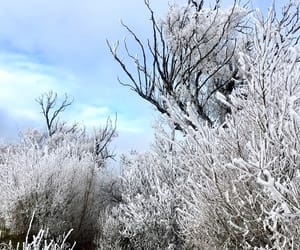 cold, frost, and new zealand image