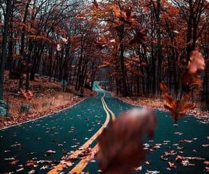 arboles, hojas, and tumblr image