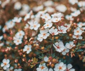 beautiful, spring, and floral image