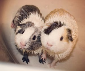 animals, gif, and paws image