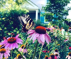 butterfly, facebook, and iphone image