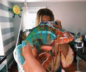 Best, chameleon, and love image