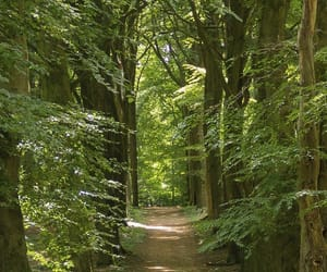 background, forest, and green image