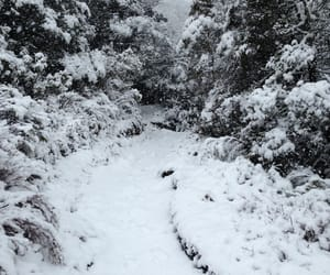forest, snow, and snowing image