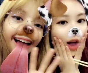 lisa, park chaeyoung, and rose image