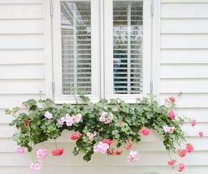 flowers, window box, and garden image