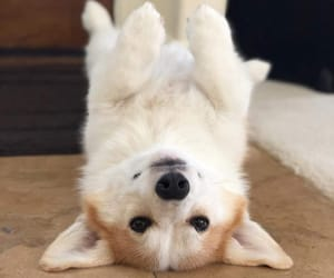 adorable, animal, and aww image