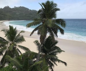 beach, palms, and sky image