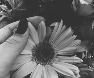 dark, flower, and tumblr image