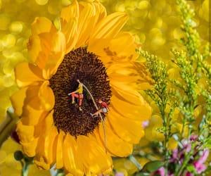 aesthetic, minimalism, and sunflower image