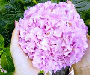 flower, summer, and garden image