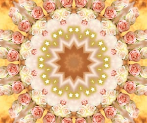 etoile, rose, and roses image