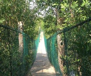 bridge, nature, and quiet image