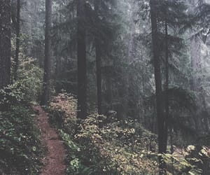aesthetic, inspiration, and nature image