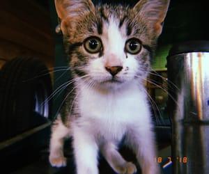 adorable, kitty, and huji image