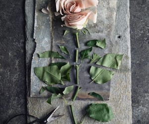 rose and cut image