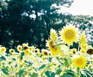 boho, bushes, and florals image