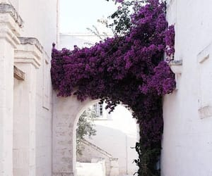 flowers, purple, and tumblr image