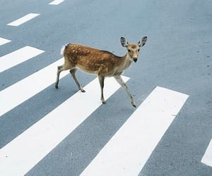 animals, pedestrian, and photography image