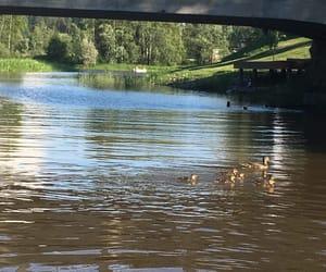 animals, bridge, and finland image
